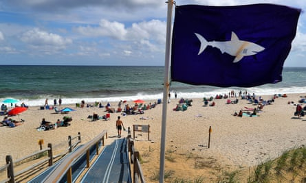 A shark flag blows in the wind at Nauset beach in Orleans. Cape Cod wildlife officials have warned the 4 July holidays are peak season for sharks too.
