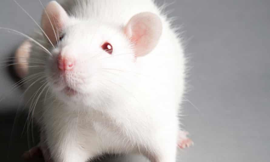 Smelling a rat: a recent report about 'toxic' nanoparticles in baby formula was based on rats being injected with them at extremely high concentrations. There is no way conclusions could be drawn about risks to babies from the rat study.