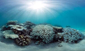 Coral bleaching in the Maldives during May 2016, captured by the XL Catlin Seaview Survey