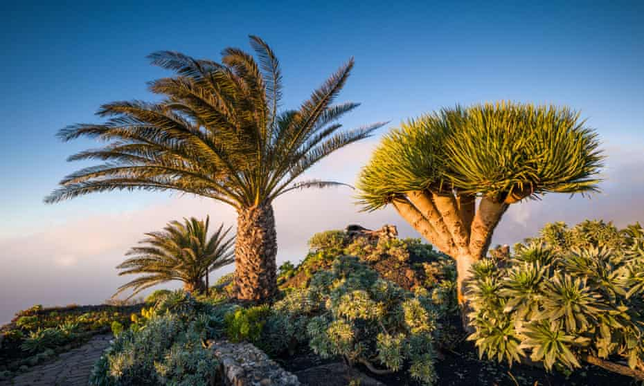 The Canaries' subtropical vegetation, such as here on El Hierro island, makes it more exotic than mainland Europe.