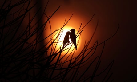 Birds at sun rise amid smoke from a burning tract of Amazon jungle, being cleared by loggers and farmers near Porto Velho, Brazil