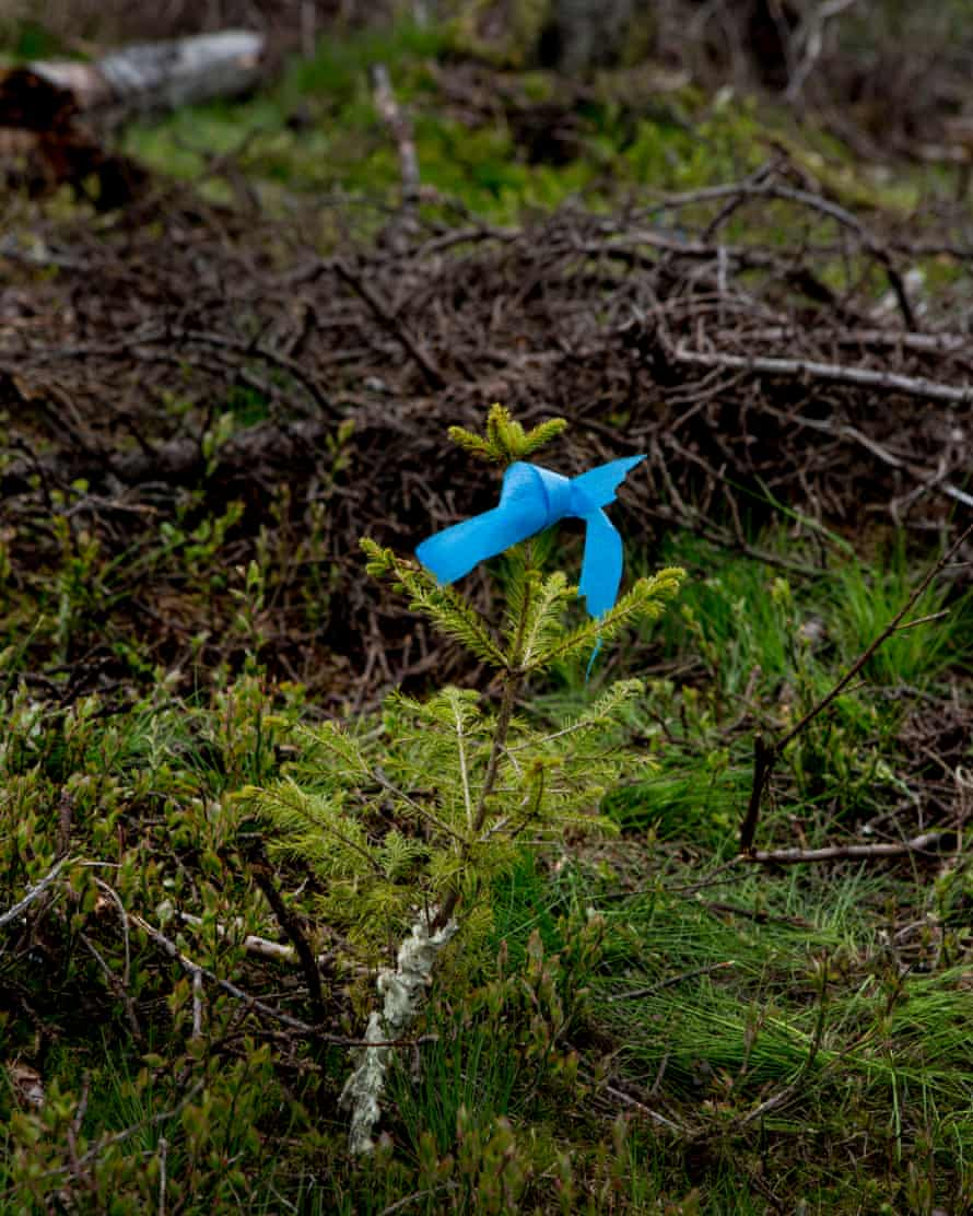 One of the future Future Library trees growing in Nodmarka forest.