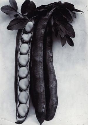 Bean Longpod, c1895-1910 by Charles Jones. © Sean Sexton/ Dulwich Picture Gallery