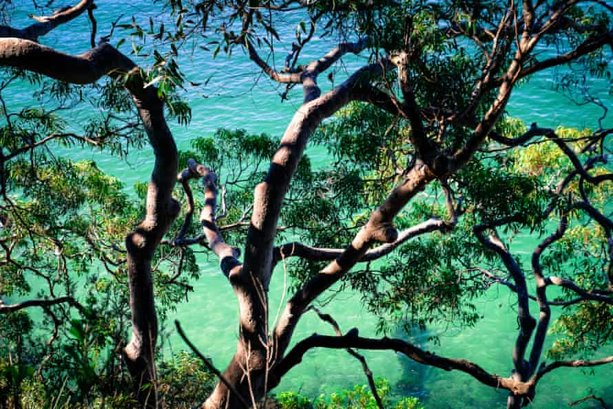 Gum tree branches hang over the water in Cremorne.