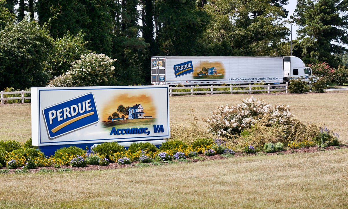 I Can T Get Above Water How America S Chicken Giant Perdue Controls Farmers Farming The Guardian