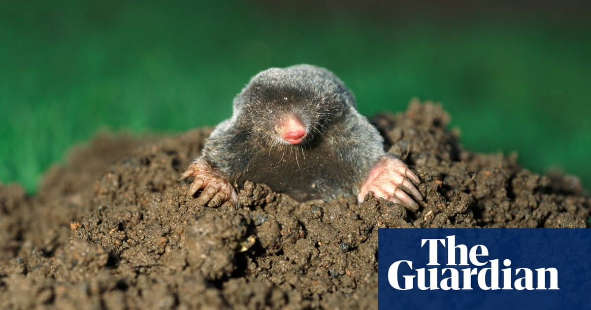 What shade of brown is the French word for mole? The Weekend quiz
