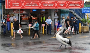 Sydney, Australia: a pelican is seen on webbed foot near the city's fish market