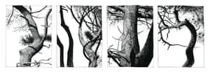 Monochrome drawings from the series Pines 2015