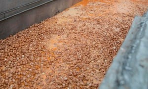 Eggs are destroyed at a chicken farm in Belgium.