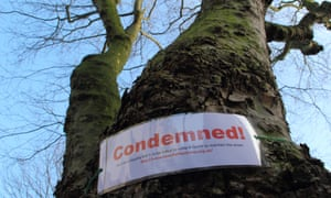 A sign strapped to a tree in Nether Edge, Sheffield alerts passers by that it has been earmarked for felling.