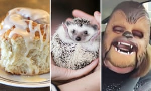 'Too pure': a perfect cinnamon roll, an adorable hedgehog, and Chewbacca Mom.