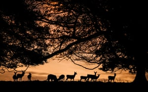 Deer silhouetted during the autumn sunrise at Fountains Abbey in North Yorkshire, UK