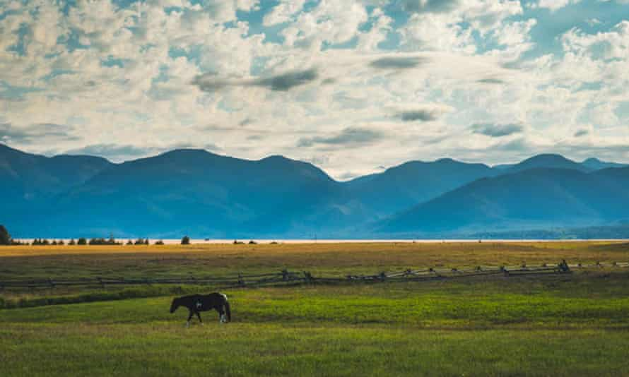 Lone horse in a field surrounded by mountains. Glacier national park, Montana.