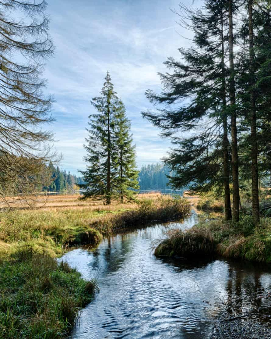Bavarian Forest National Park, Lake Grosser Abersee in autumn