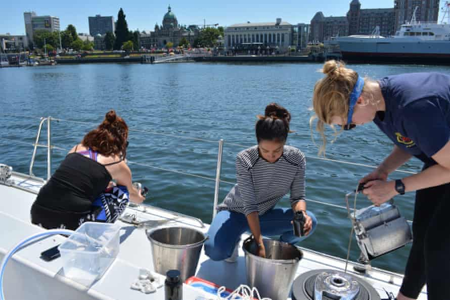 Meg Tapp (left), Laura Leiva, and Imogen Napper collect samples from the floor of the marina in Victoria, British Columbia.