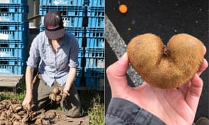 Tech startups such as Souper Seconds and Cerplus have developed web and mobile services to help farmers find buyers of surplus or imperfect-looking produce.