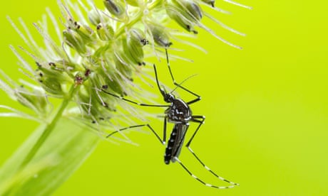 Global heating driving spread of mosquito-borne dengue fever