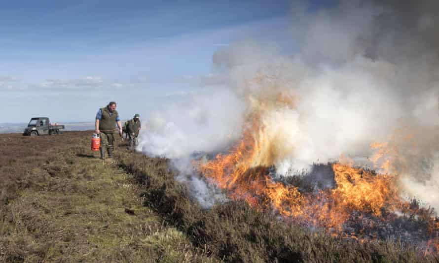 Gamekeepers start a fire on a grouse moor.