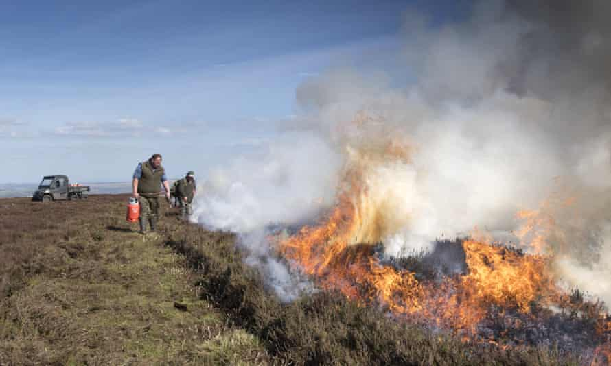 Gamekeepers burn a grouse moor in the Yorkshire Dales