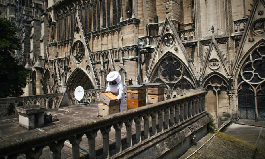Sibyle Moulin tending the hives on the roof of Notre Dame in 2018.