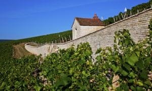 Vineyards near Chablis, Burgundy.