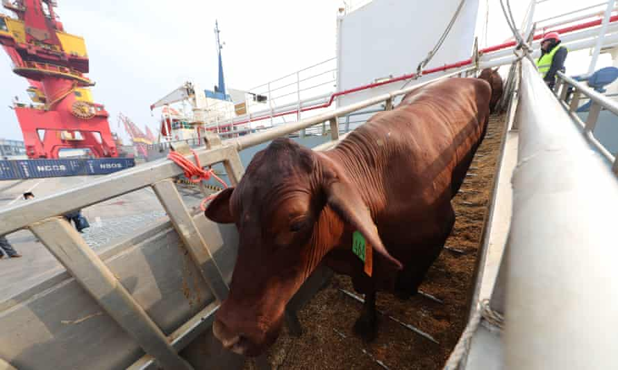 The UK imported 560 tonnes of beef and veal worth £4.1m from Australia last year.