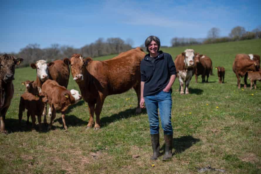 Hen Curtis, West Emlett Farm