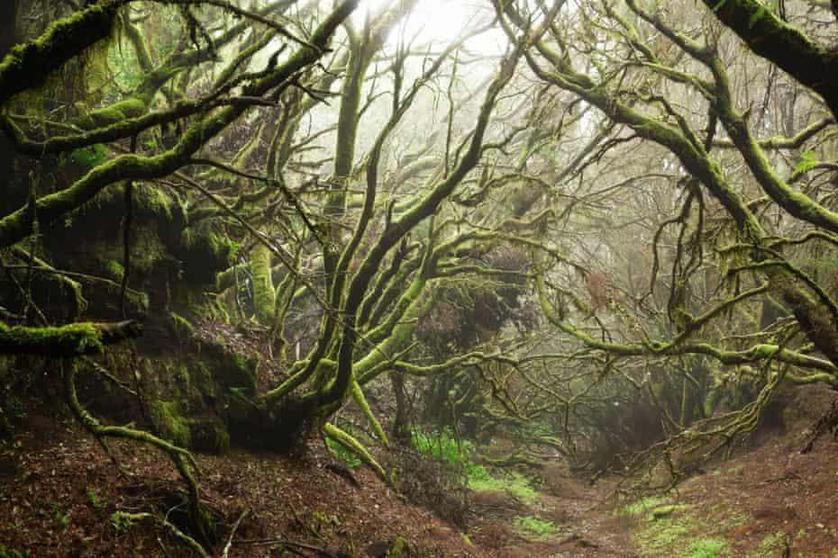 A foggy laurel forest at the heart of El Hierro, Canary Islands, Spain