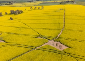 In NSW you'll find canola fields in the Riverina and central west regions.