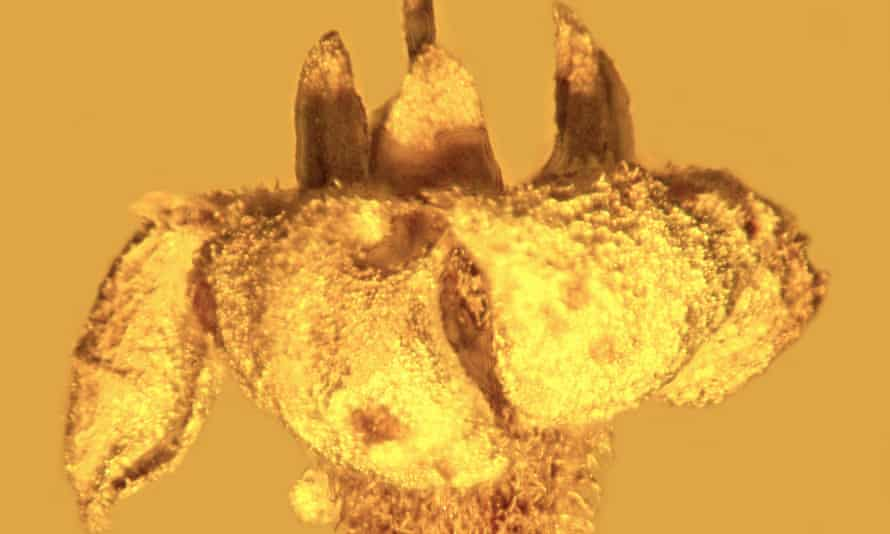 Strychnos electri is a newly found fossil flower. A member of the asterid family, the flower fossils were found 30 years ago, but only recently classified.