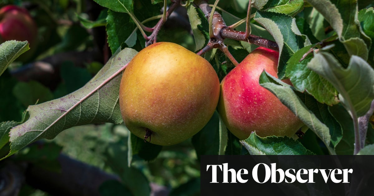 UK food supply chain vulnerable to cyber-attack, expert warns