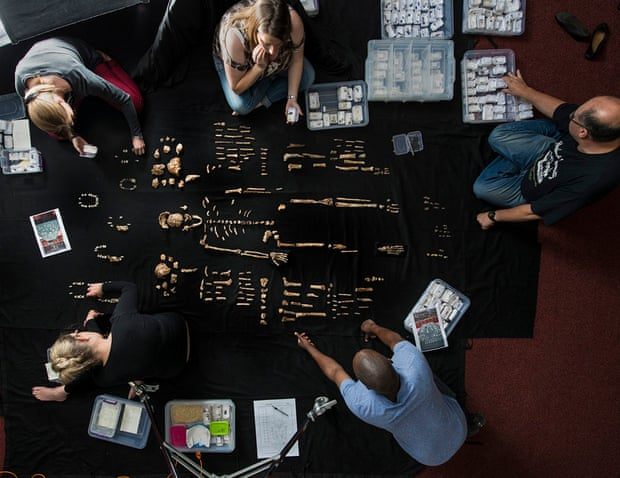 The team lays out fossils of Homo naledi at the University of the Witwatersrand's Evolutionary Studies Institute.