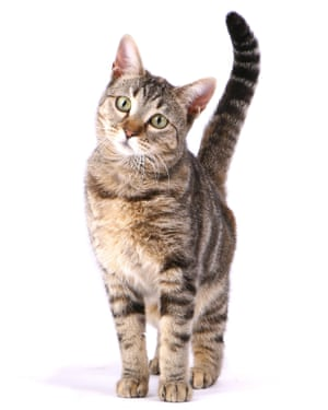 Paws for thought: Joan Bowell, 'Cat Lady of Syros' and her husband Richard now plan to set up a cat sanctuary in upstate New York.