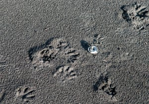 A nest of Kemp's Ridley sea turtle eggs that were eaten by birds of prey at the Punta Mala national wildlife refuge, in Puntarenas, Costa Rica. The turtles are an endangered species