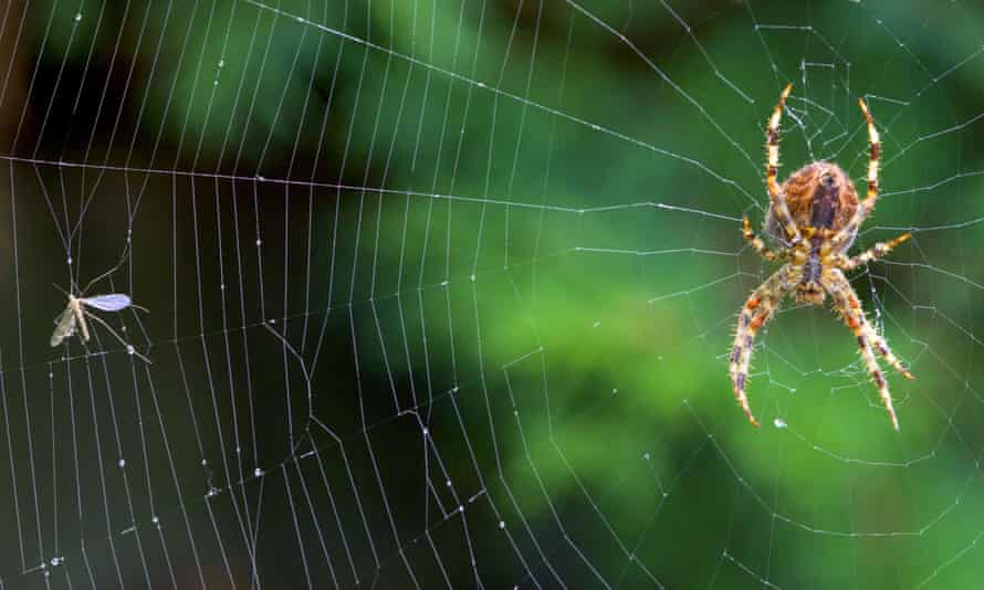 'The spider Love, which transubstantiates all' … a large garden spider in the middle of its web.