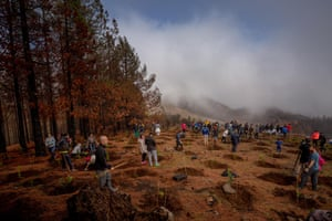 Volunteers of the Foresta Foundation plant saplings in Montanon Negro in Valleseco as part of the Treemac project to reforest the areas hit by last summer's wild fires in the Canary Islands.