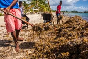 Clearing seaweed at Placencia