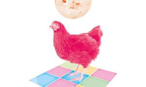 Chicken and disco ball illustration