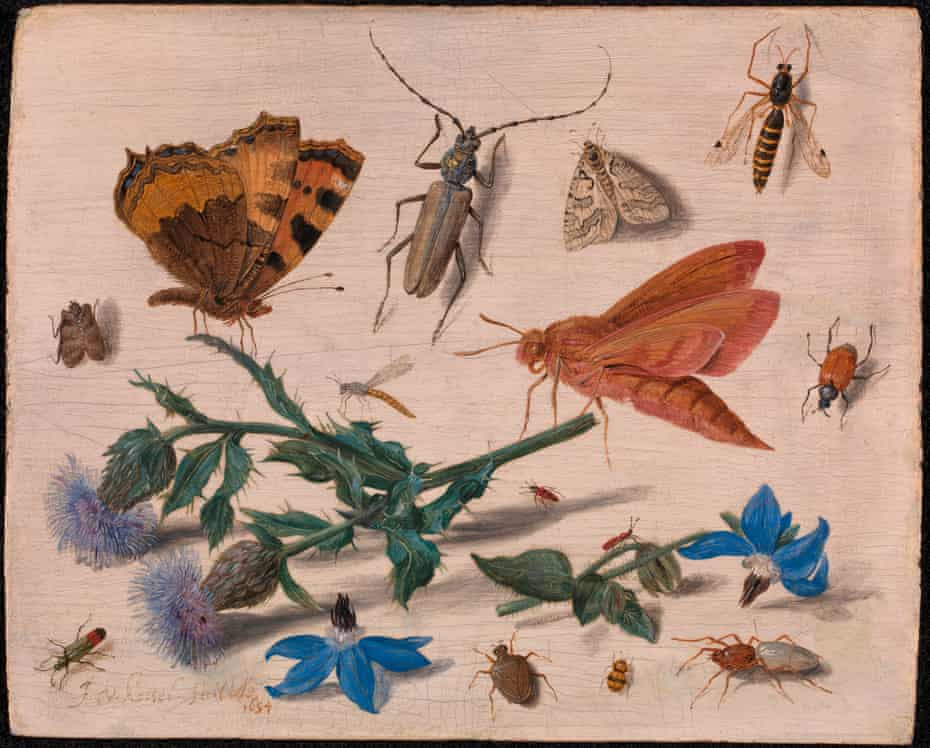 Butterflies, Moths and Insects with Sprays of Creeping Thistle and Borage by Jan van Kessel the Elder.