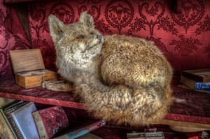 A stuffed fox on one of the bookshelves.