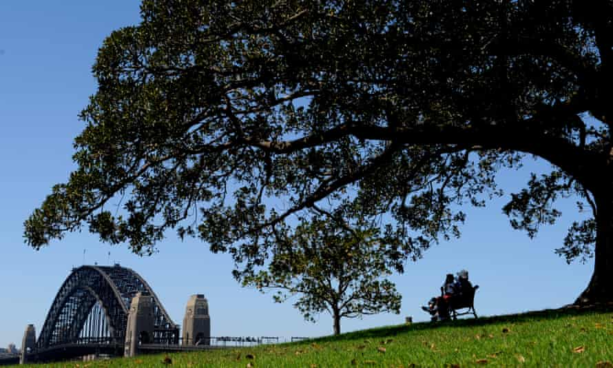 A Moreton Bay Fig tree looms large with the Sydney Harbour Bridge in the background at Observatory Hill Park