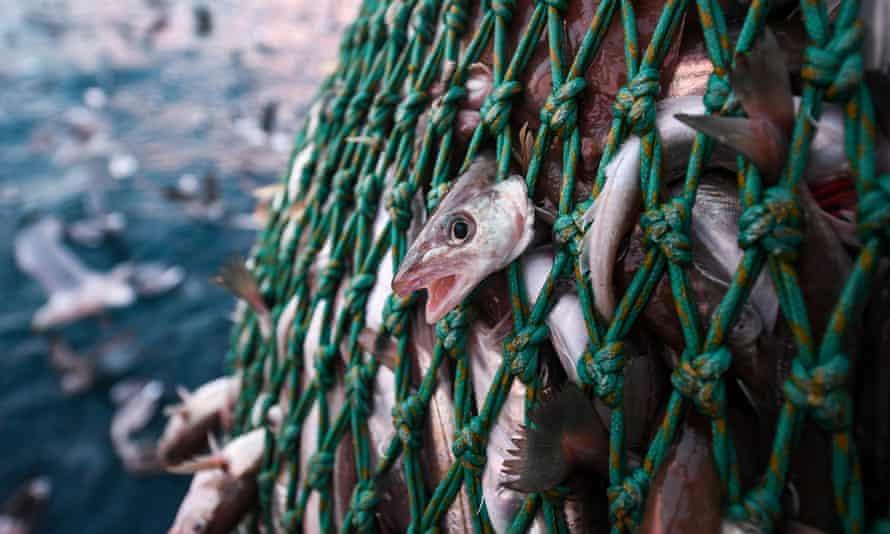 Trawler fishing off the coast of Shetland
