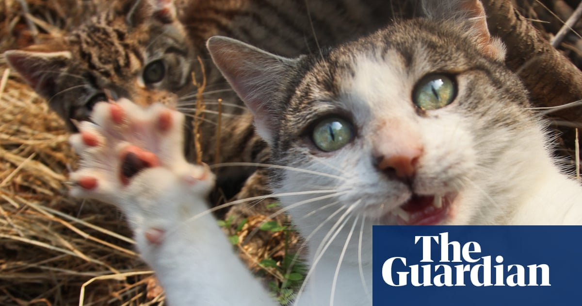 Claws out! Why cats are causing chaos and controversy across Britain