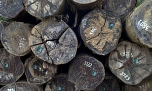 Legally logged timber in Indonesia, bound for Europe. Illegal logging is estimated to be responsible for up to 30% of all global forestry production.