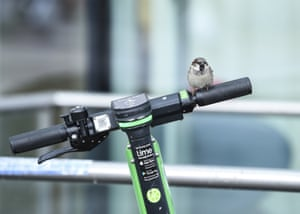 A sparrow sits on the handlebars of an e-scooter at Berlin's Ostbahnhof station in Germany