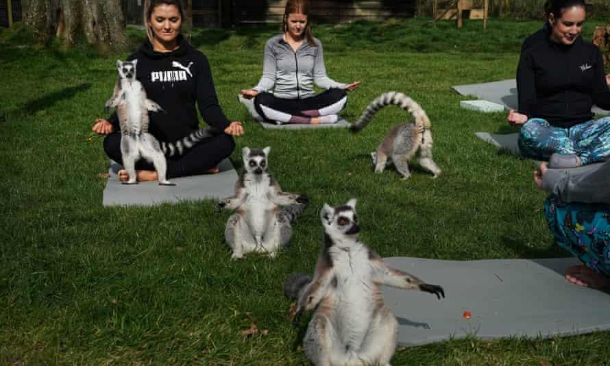 Lemoga classes with lemurs and visitors striking the same pose