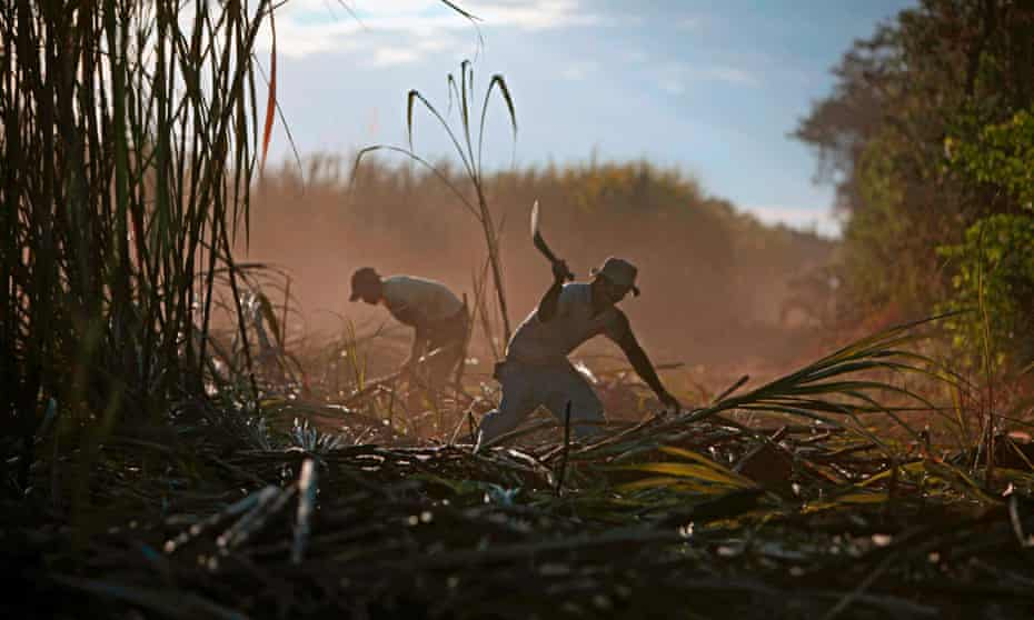 Two men work in the fields of the San Antonio sugar mill in Chichigalpa, Nicaragua.