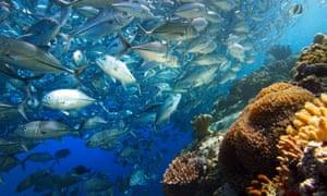 A school of fish near Borneo.
