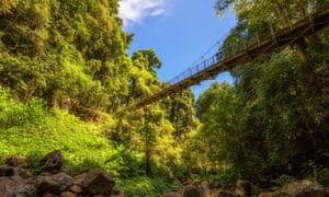 Footbridge in the Rainforest of Dorrigo National Park