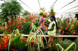 A worker arranges flowers during the final day of preparations for the RHS Chelsea flower show in London